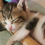 質の良い睡眠が明日への元気の源