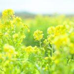 春は、心身のデトックスに最適な季節